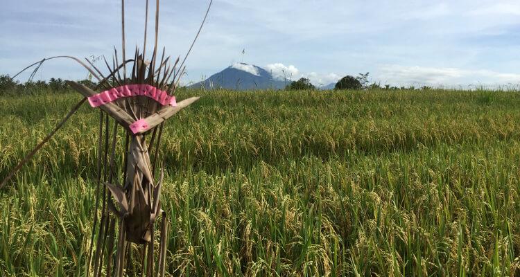 Bali Ausflugtipps