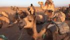 surfurlaub-in-marokko-wueste-01