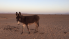 surfurlaub-in-marokko-wueste-04