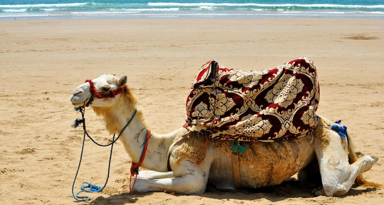 surfhaeuser-marokko