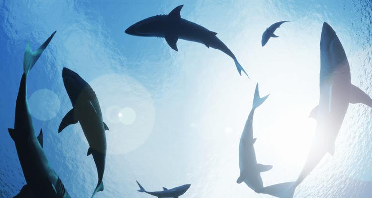angst-vor-haien-keine-panik